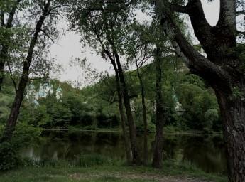 Святогорск,лес